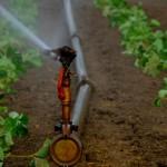 Agricultura - control del estrés hidrico