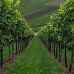 Agricultura Recuento de plantas mediante drones
