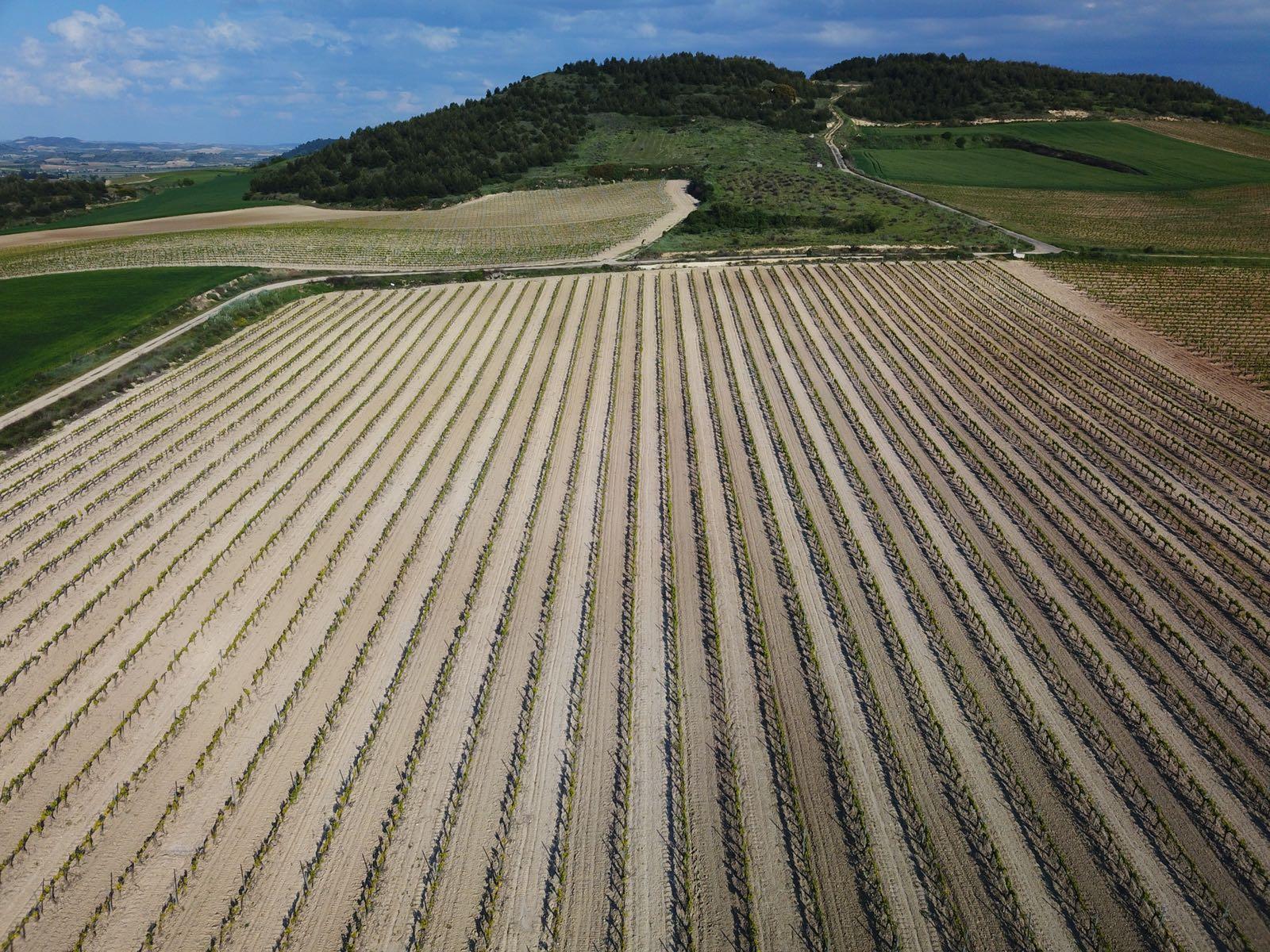 ACG Drone - agricultura de precisión de con drones